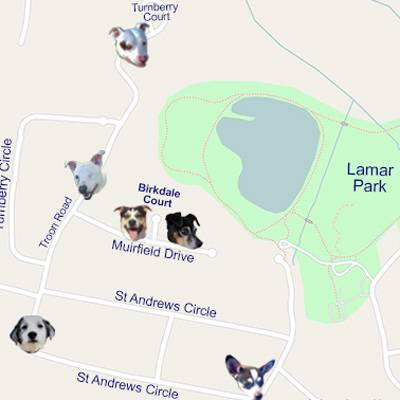 Map the missing dogs